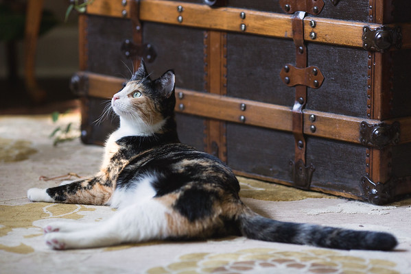 Calico cat by the trunk