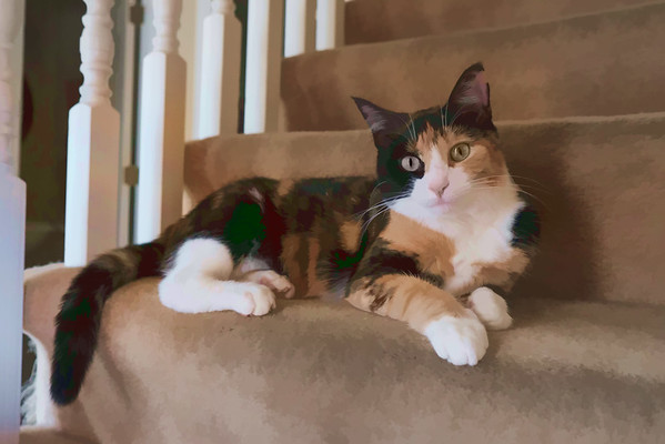 Cat photo run through Topaz Labs