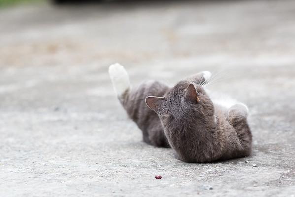 Gray Cat Tiki on driveway