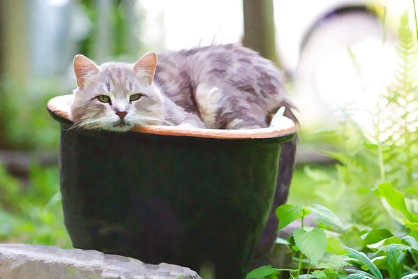 Cat photo using Topaz Labs