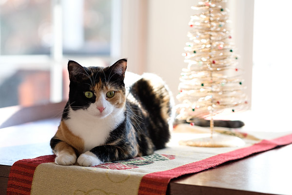 Luxie and her Christmas tree