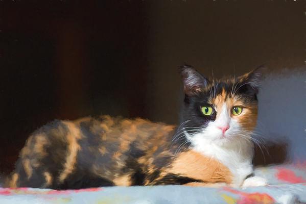 Calico cat - Topaz Labs Impressionist plugin
