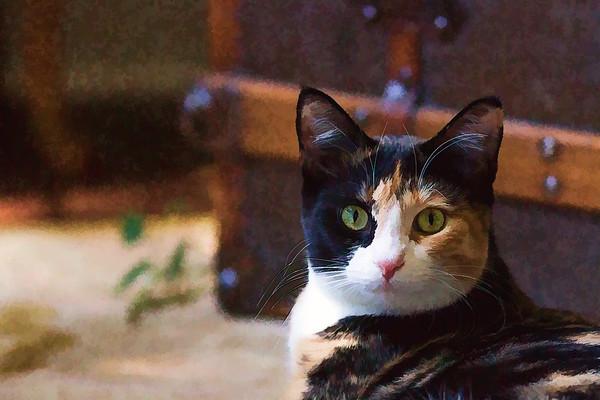 Cat using Topaz Labs