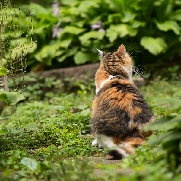 Calico cat in the yard