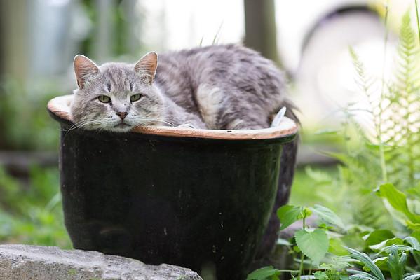 Kitty cat in a garden pot
