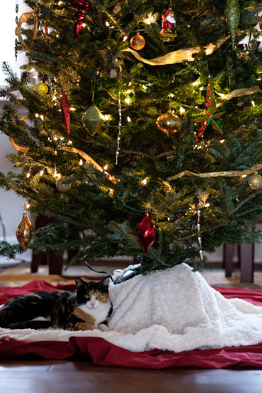 Calico cat, Luxie, underneath the Christmas tree.