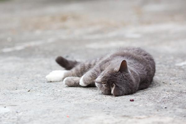 Gray cat on driveway