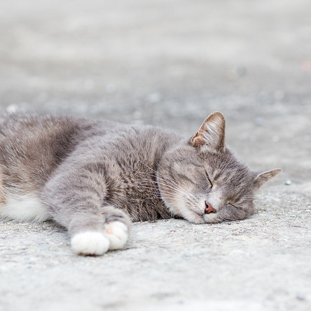 Gray cat sleeping on driveway