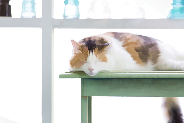 Calico cat | Topaz Labs