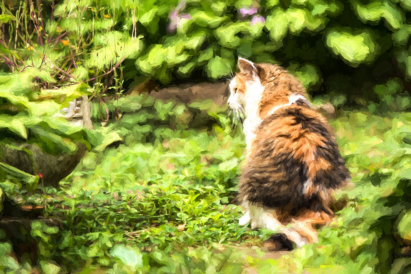 Calico cat in the garden with Topaz Plugins
