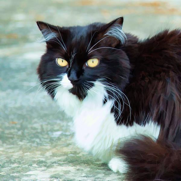 Black and white cat run through Topaz Labs