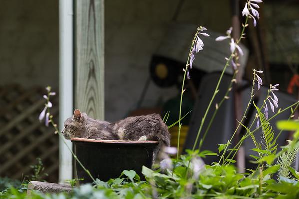 Kitty cat in garden pot