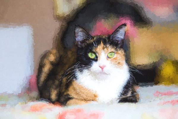 Calico cat using Topaz Labs Impressions plugin