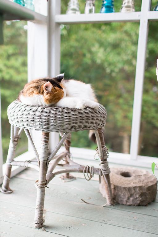 Calico cat on wicker stool