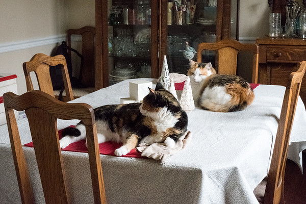 Two calico cats on dining room table with Christmas decor