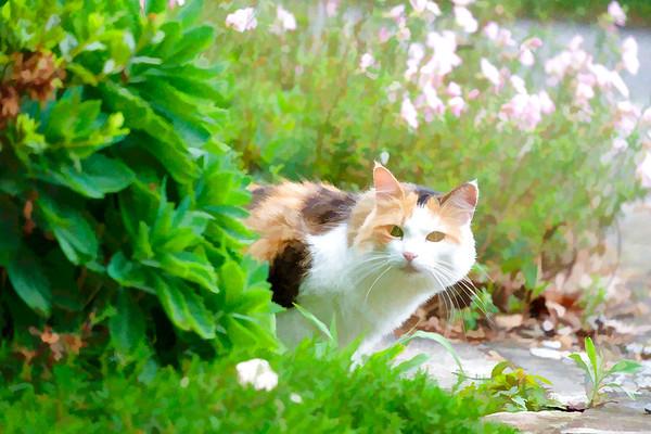 Calico cat edited using topaz lab plugin