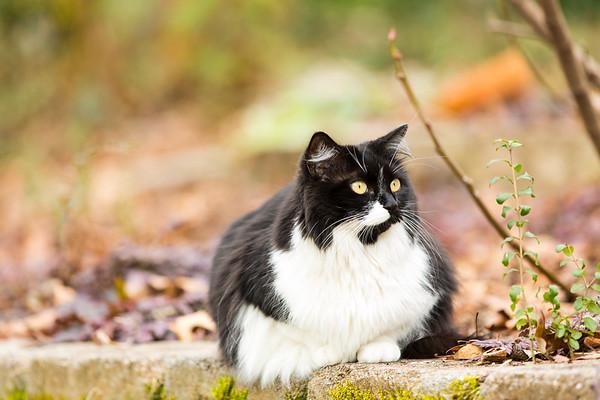 Patchouli kitty