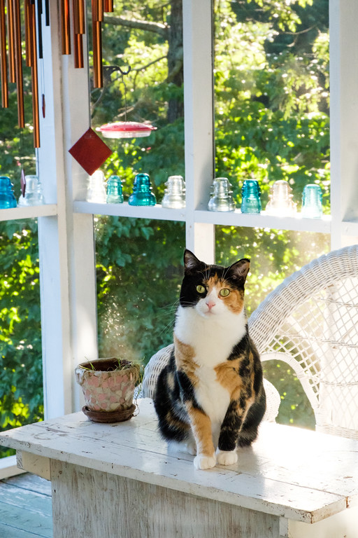 Calico cat on screened in porch