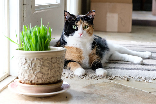 Luxie and her cat grass