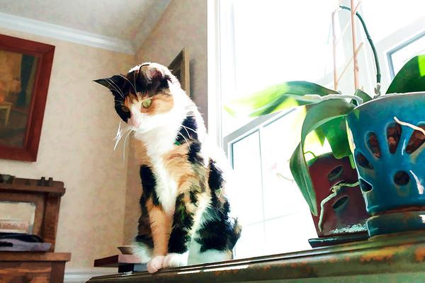 Calico cat edited using topaz labs