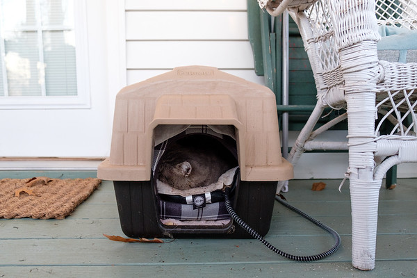 keeping feral cats warm in the winter