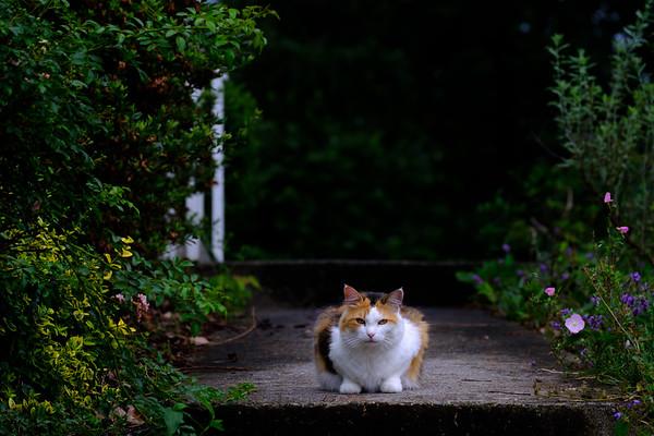 Calico cat on the sidewalk