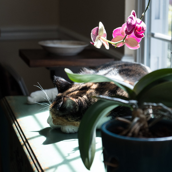 Luxie and the orchids