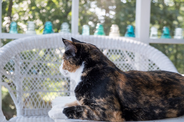 Luxie on the porch