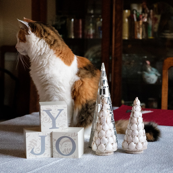 Calico cat on table with Christmas decor
