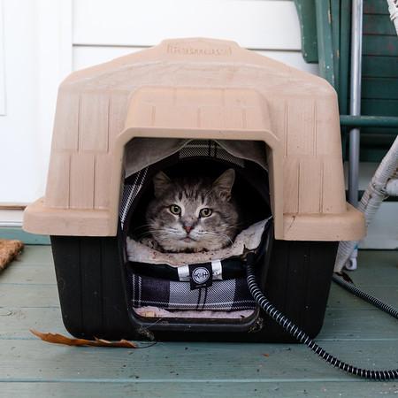 Keeping feral cat warm