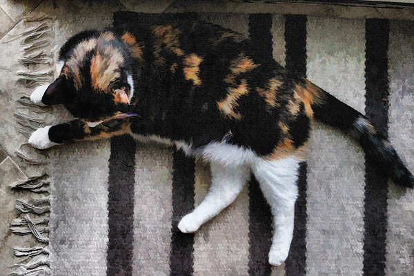 Calico cat on rug with topaz labs