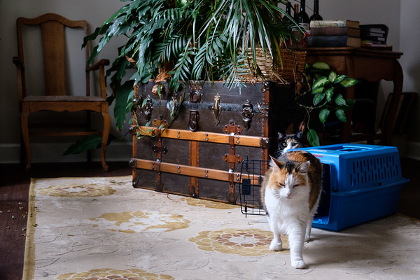 Calico cats and carrier
