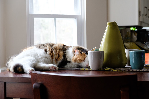Calico cat with Russell Pottery