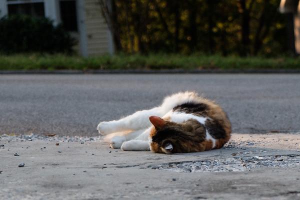 Cat on driveway
