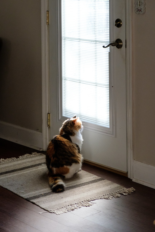 Calico cat looking out the door