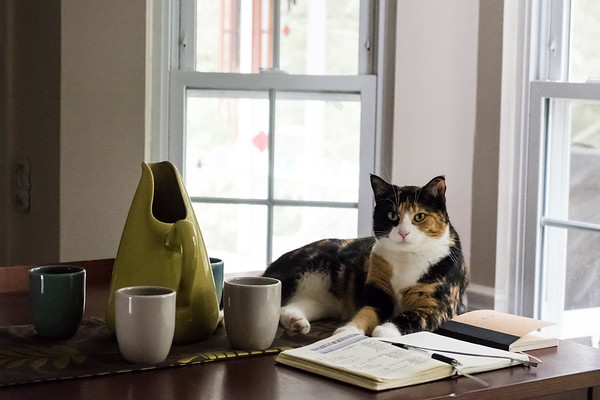 Calico cat with bullet journal and Bauer pottery