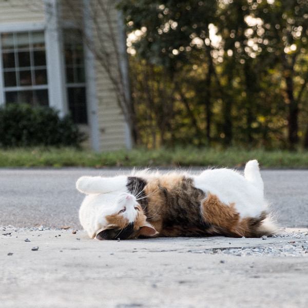 Cat rolling around on driveway.