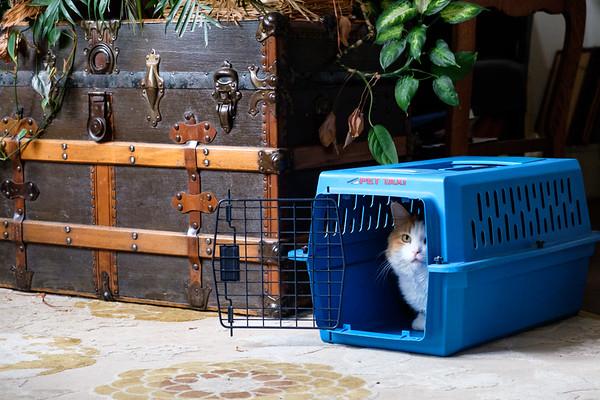 Calico cat in cat carrier