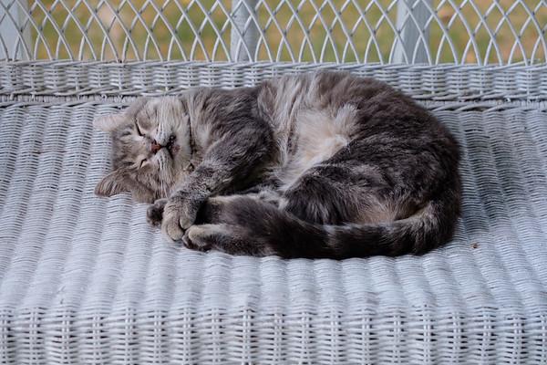 cat on wicker