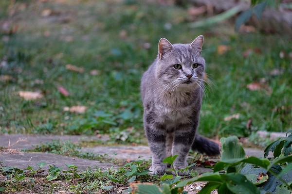 Winston Purrchill Feral Kitty