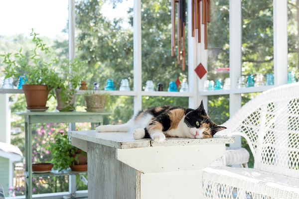 Summertime and kitties on the porch