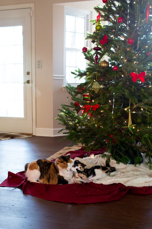 Christmas Cats and their Christmas Tree
