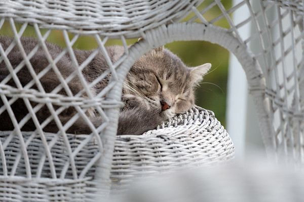 cat on wicker furniture