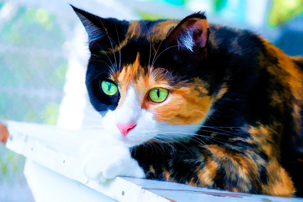 Calico cat with Topaz Labs adjustments