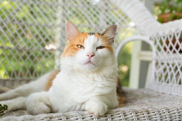 Calico cat on wicker