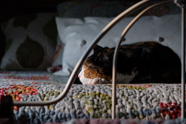 cat sleeping on bed in evening light