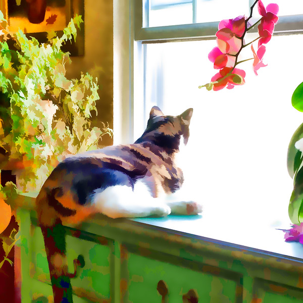 Calico cat with Topaz Labs
