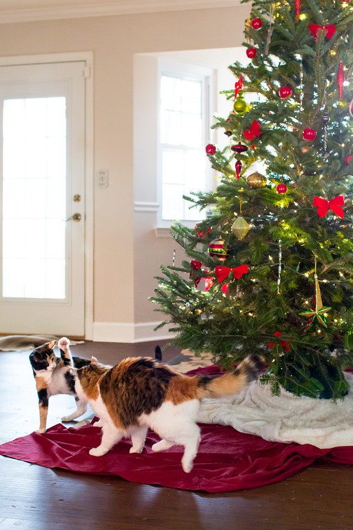 Calico cats Christmas