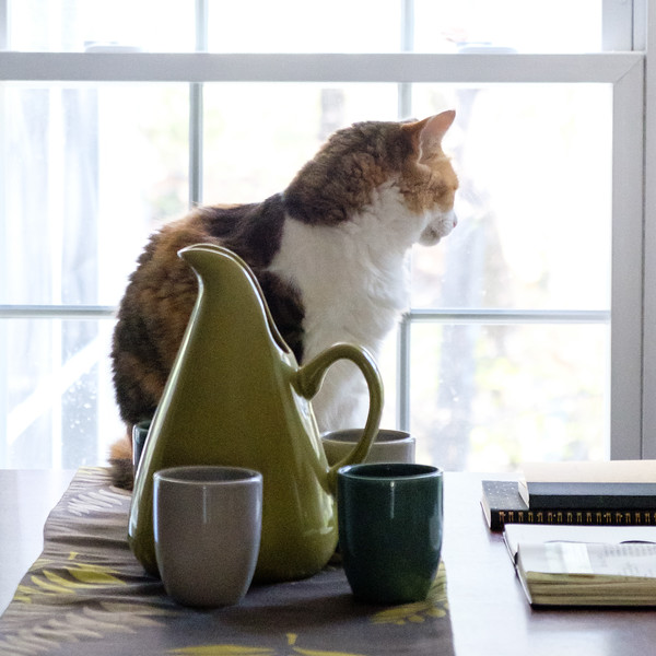 Calico cat on table with pottery and journals