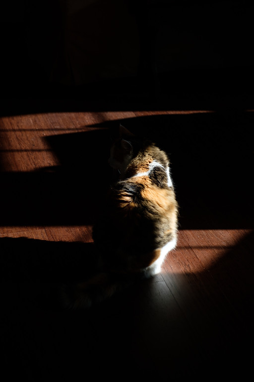 Coco Kitty in the sun shine